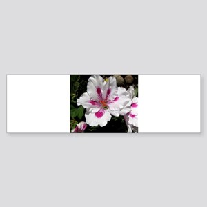 GERANIUM FLOWER~Regal Azalea~ Sticker (Bumper)