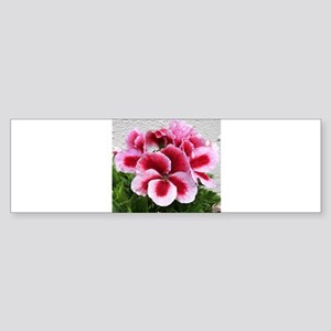 GERANIUM FLOWER~Regal Pinwheel~ Sticker (Bumper)