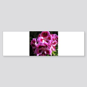 GERANIUM FLOWER~Regal Orchid~ Sticker (Bumper)