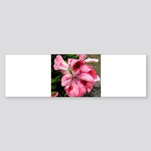 GERANIUM FLOWER~Regal Pink~ Sticker (Bumper)