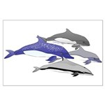 Four Dolphins together Posters