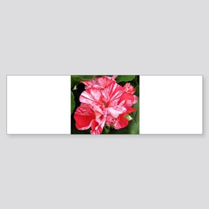 GERANIUM FLOWER~Mosaic Red~ Sticker (Bumper)