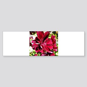 GERANIUM FLOWER~Ivy Black~ Sticker (Bumper)