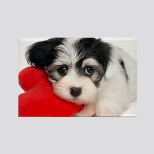Lover Valentine Havanese Puppy - Rectangle Magnet