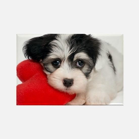 Lover Valentine Havanese Puppy - Rectangle Magnet