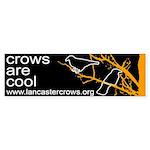 Crows are Cool -- Bumper Sticker