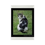 Grey White in Kenner Rectangle Magnet (10 pack)