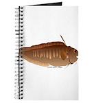 Eel Cod fish Journal