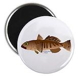 Toothfish (Sea Bass) fish (Annas Antarctica) Magne