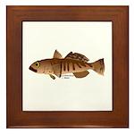 Toothfish (Sea Bass) fish (Annas Antarctica) Frame