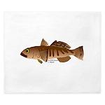 Toothfish (Sea Bass) fish (Annas Antarctica) King