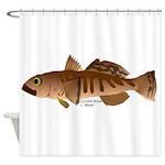 Toothfish (Sea Bass) fish (Annas Antarctica) Showe