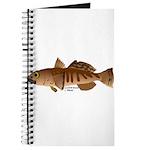Toothfish (Sea Bass) fish (Annas Antarctica) Journ