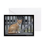 Orange You Glad You Saw Me Greeting Cards (Pk of 1