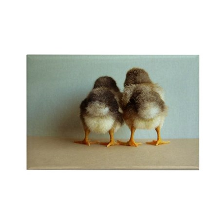 Shy Chicks Rectangle Magnet