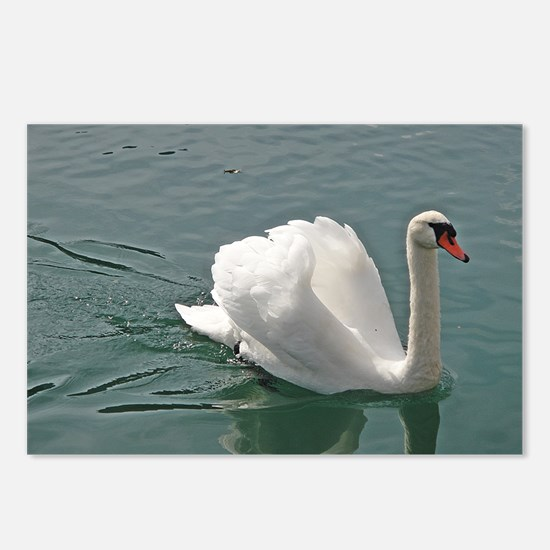 Reflective white swan Postcards (Package of 8)