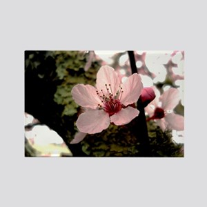 Cherry Blossom, 1 Rectangle Magnet