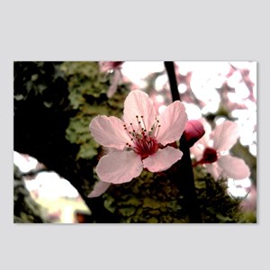 Cherry Blossom, 1 Postcards (Package of 8)