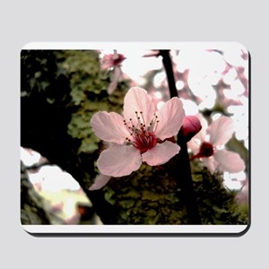 Cherry Blossom, 1 Mousepad