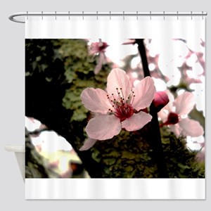 Cherry Blossom, 1 Shower Curtain