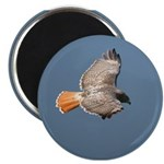 DBWF Outfitters Magnet the Red Tailed Hawk