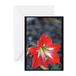Flower at the Park Greeting Cards (Pk of 20)