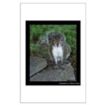 Just Plain Nuts - Digital Photography Posters