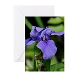 Purple Iris in New Orleans Greeting Cards (Pk of 1