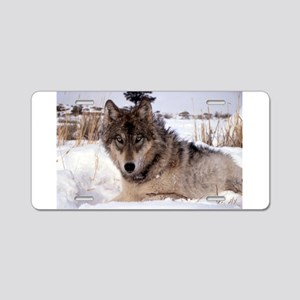Wolf in Yellowstone Aluminum License Plate