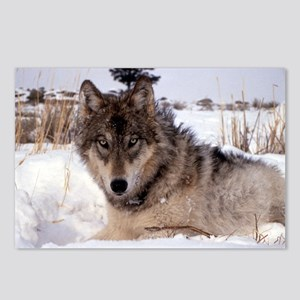 Wolf in Yellowstone Postcards (Package of 8)