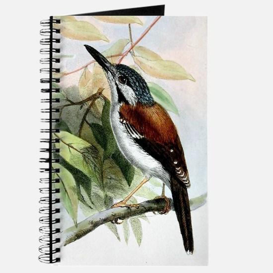 Little Wren Journal