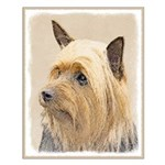 Silky Terrier Small Poster