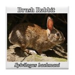 Brush Rabbit Tile Coaster