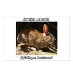 Brush Rabbit Postcards (Package of 8)