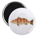 Spotted Bay Bass fish Magnet