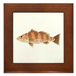 Spotted Bay Bass fish Framed Tile