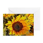 Tuscany Sunflower - Greeting Cards (Pk of 10)