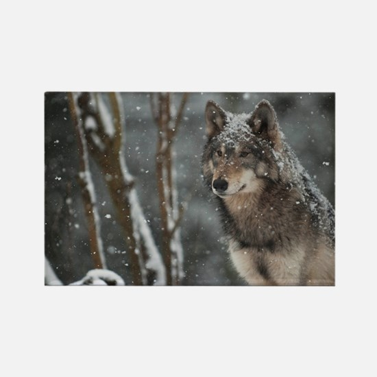 Snowy Lone Wolf Rectangle Magnet