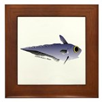 Grenadier Deep Sea fish (Annas Antarctica) Framed