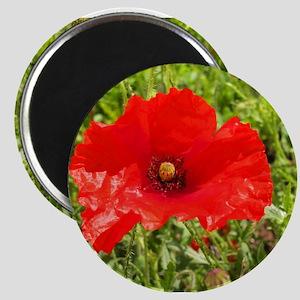 Red Poppy Flower Style 2 Magnet
