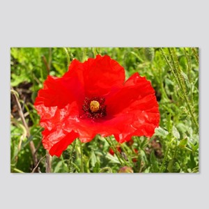 Red Poppy Flower Style 2 Postcards (Package of 8)