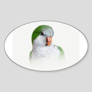 Green Quaker Parrot Sticker