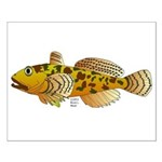 Pacific Sculpin fish Posters