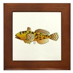 Pacific Sculpin fish Framed Tile