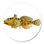 Pacific Sculpin fish Round Car Magnet