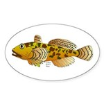 Pacific Sculpin fish Sticker