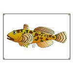 Pacific Sculpin fish Banner
