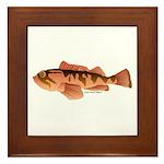 Cabazon Rockfish Scorpionfish Framed Tile