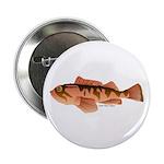 Cabazon Rockfish Scorpionfish 2.25