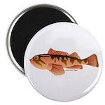 Cabazon Rockfish Scorpionfish Magnet
